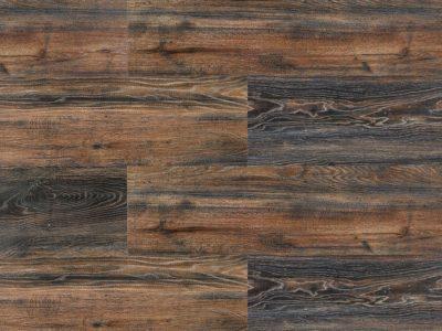 Canyon Black Oak